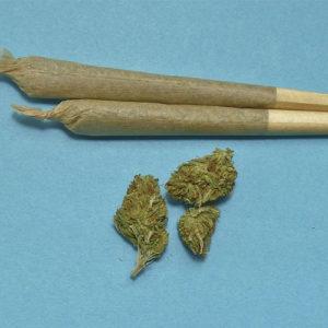 Cannabis gegen Tourette